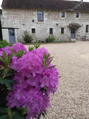 La floraison des Rhododendrons...
