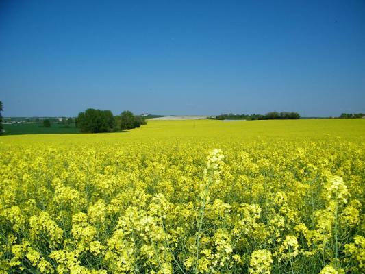 Vue sur la campagne fleurie